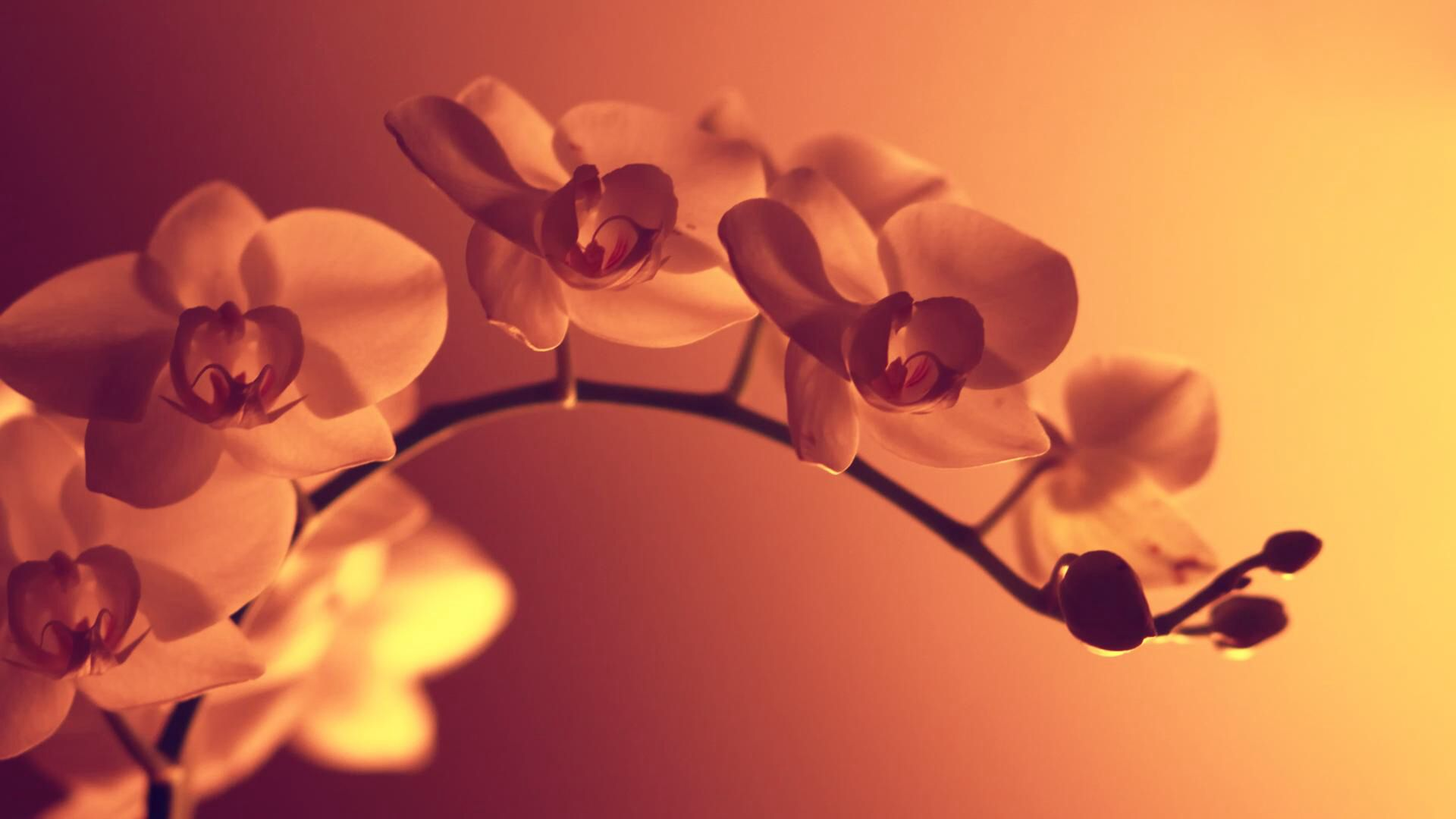 Beautiful flowers pinterest orchid and flowers