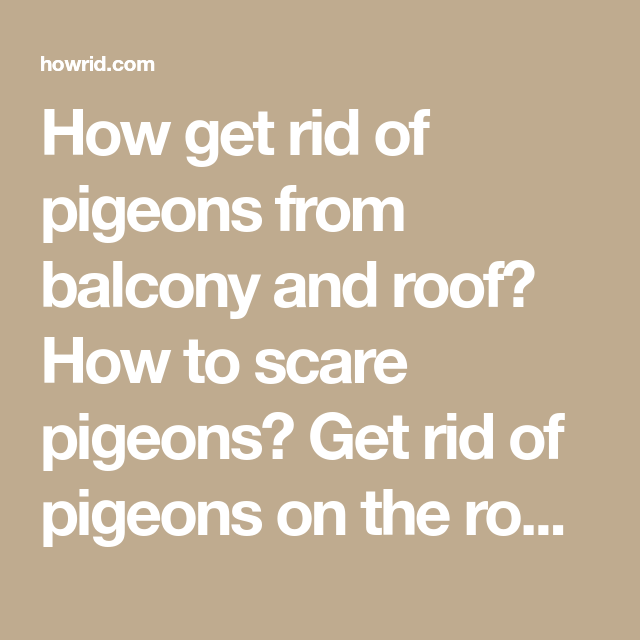 How To Get Rid Of Pigeons And Other Birds Home Remedies Get Rid Of Pigeons Rid How To Get Rid