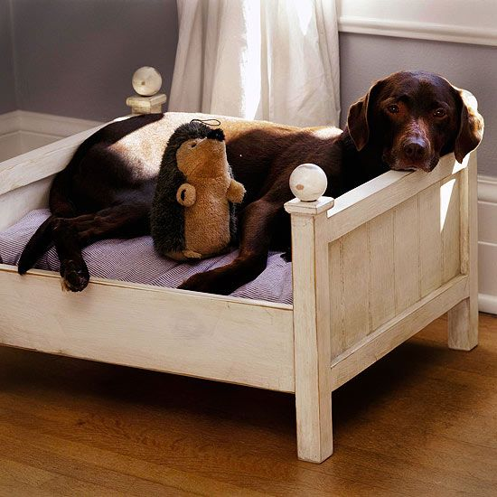Pictures Of Really Cool Dog Beds