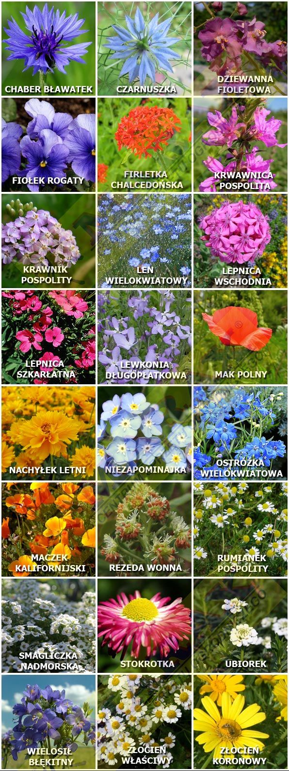 Some of the Common Polish Field and Garden Flowers