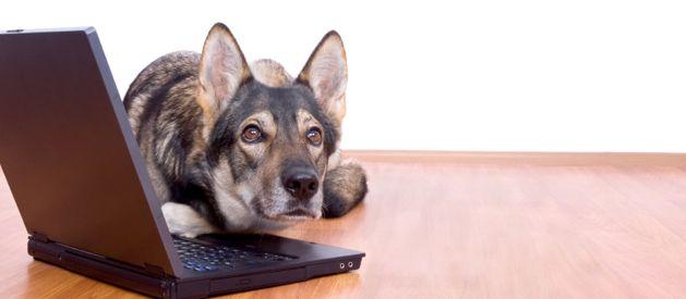 Online Pet Adoption Embrace pet insurance, Pet news, Pets