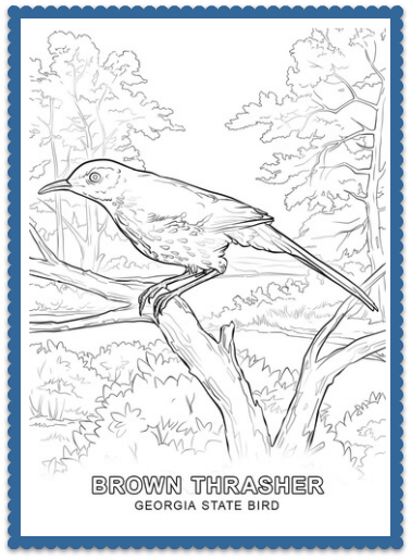 State Bird Coloring Pages By Usa Facts For Kids Bird Coloring Pages State Birds Coloring Pages