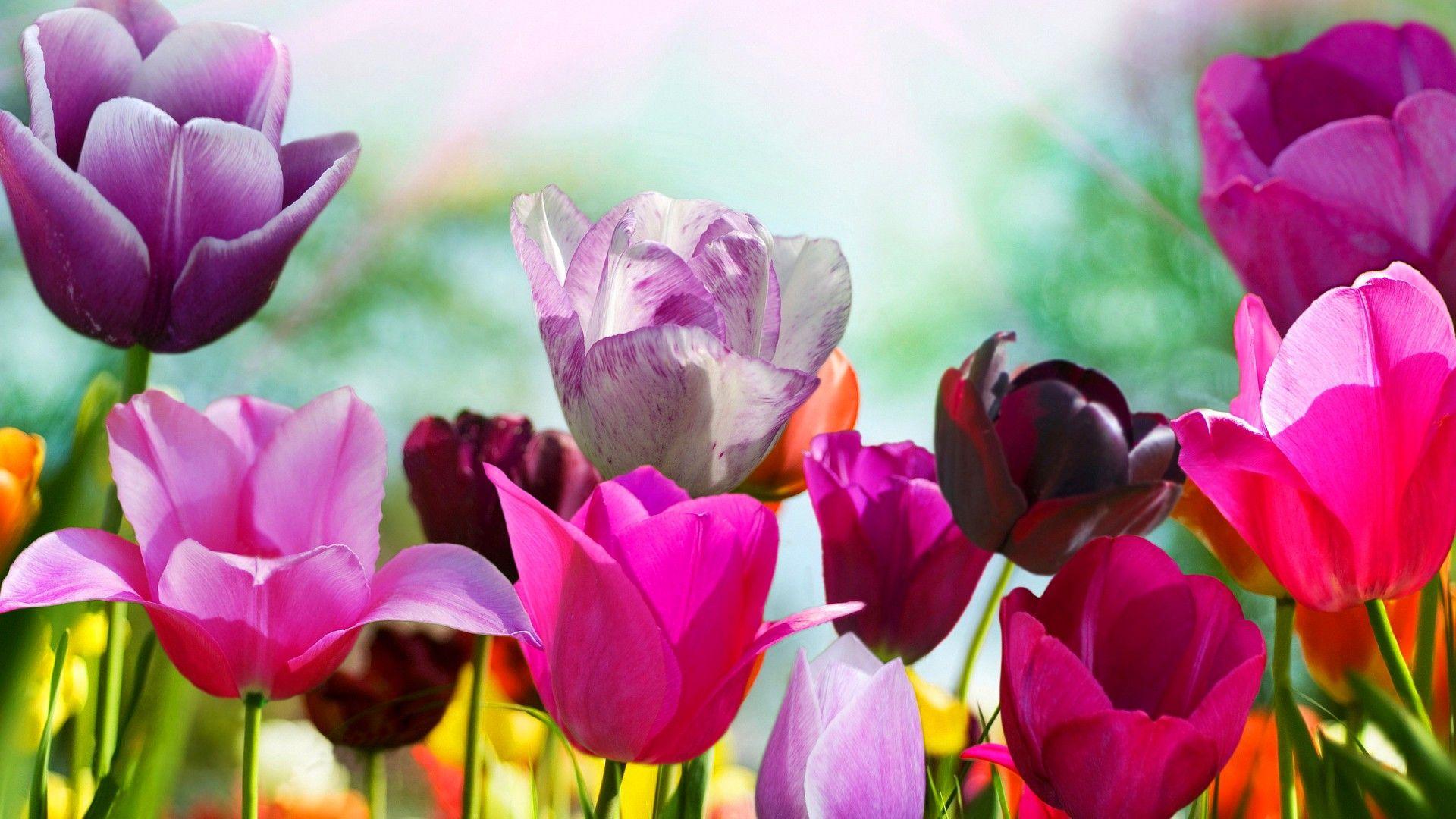 Spring flowers desktop backgrounds hd best hd wallpapers spring flowers desktop backgrounds hd best hd wallpapers mightylinksfo