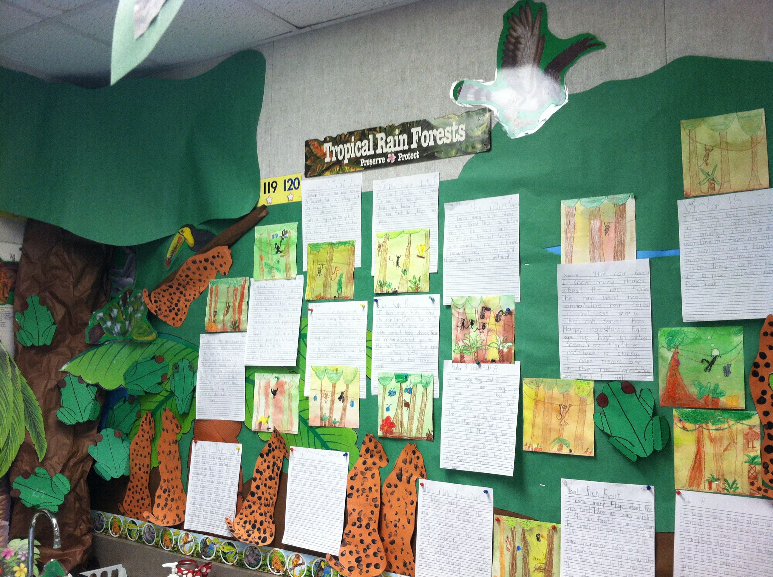 First Grade Rainforest Unit Mural With Kids Reports And