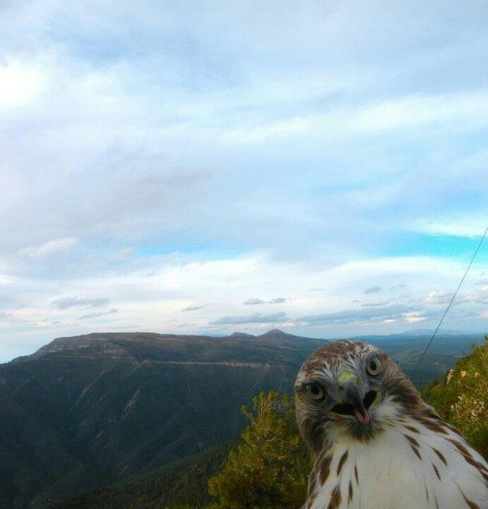 The Most Hilarious Animal Photobombs Ever Animals Hawks And - 35 hilarious animal photobombs ever