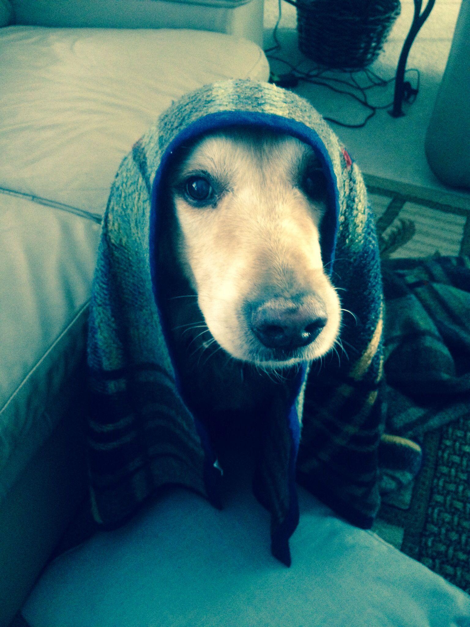He loves blankets<3