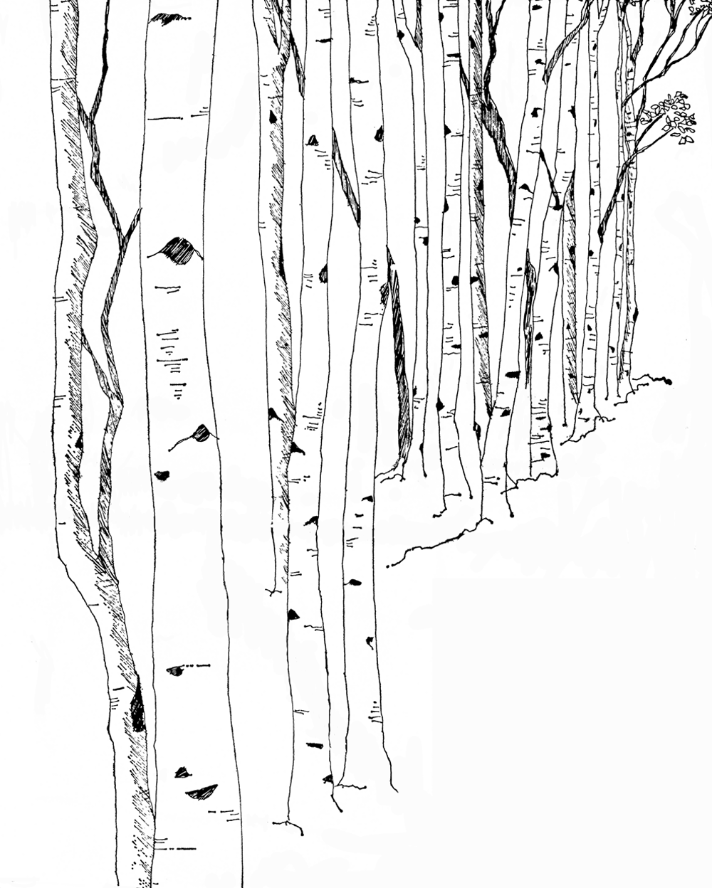 Google Image Result For Http Www Luckypalm Com Wp Content Uploads 2010 01 Birch Trees Png Birch Tree Tattoos White Birch Trees Tree Graphic