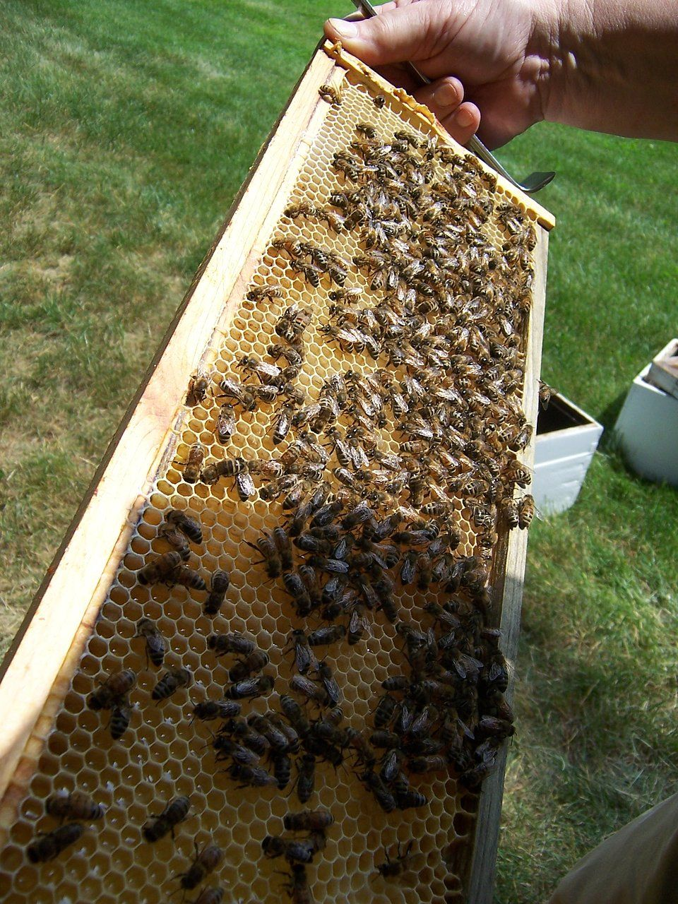 Dow Gardens- Bee\'s Local Honey can be purchased in the Dow Gardens ...