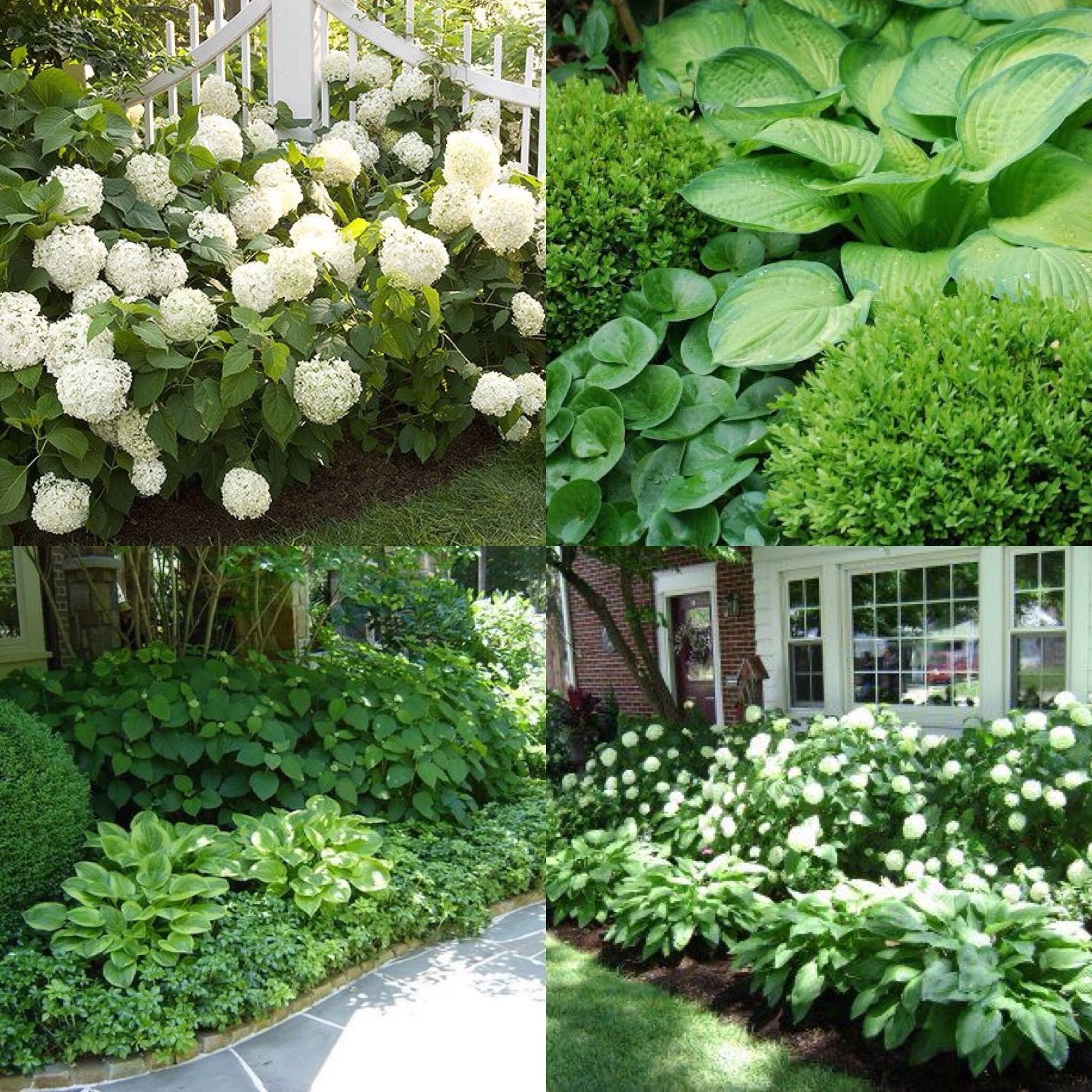 north carolina landscaping ideas - Google Search (With ...
