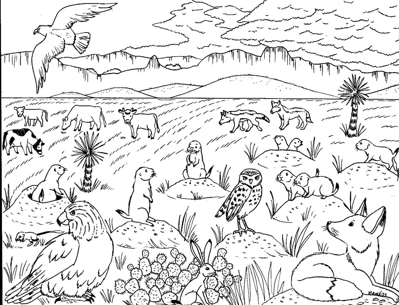Rumbo a la Sierra Madre Oriental A. C.: Material ambiental para ...