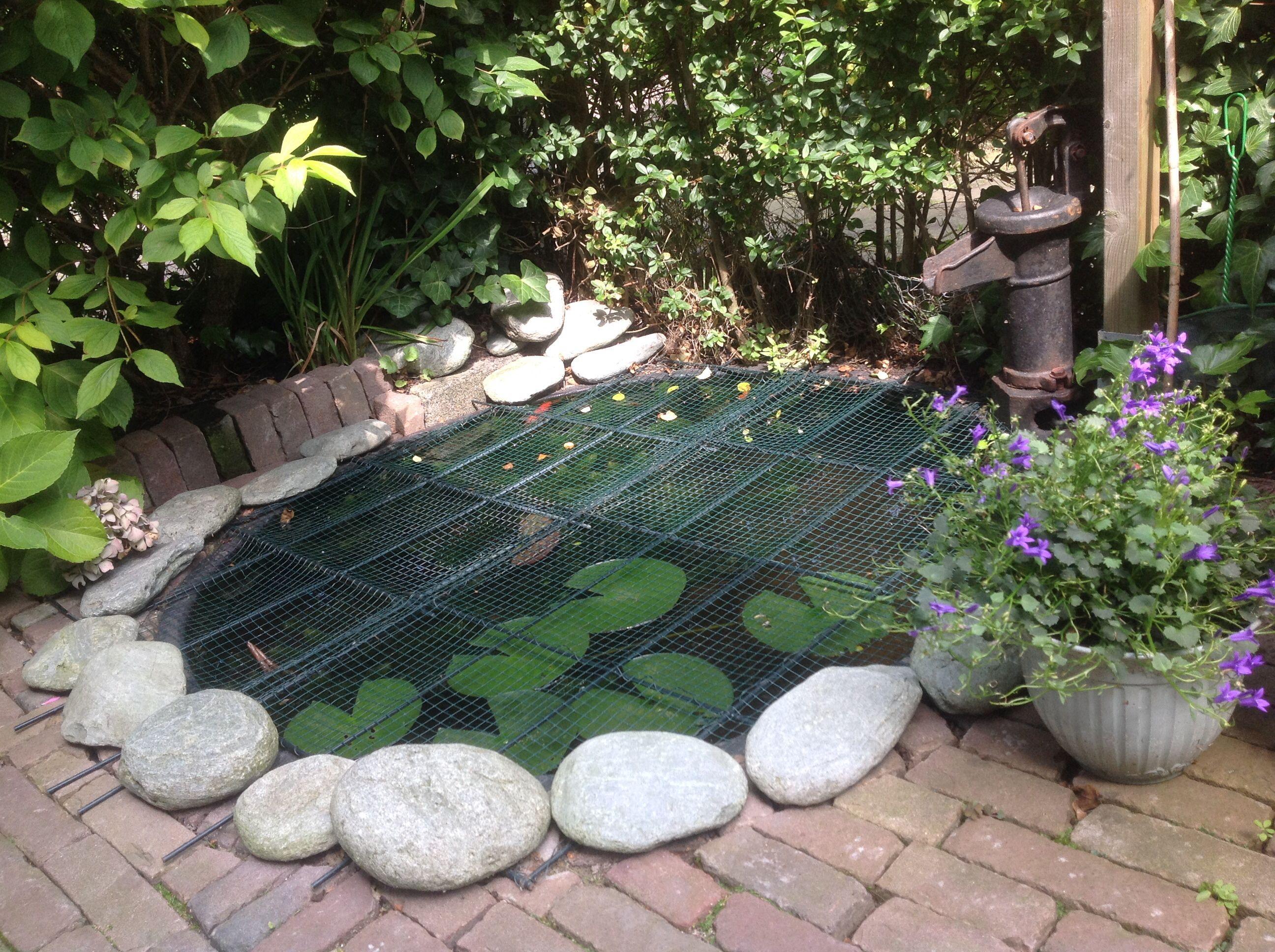 2 goudvissen een klein zwart visje en een salamander in for Vijver voor kleine tuin