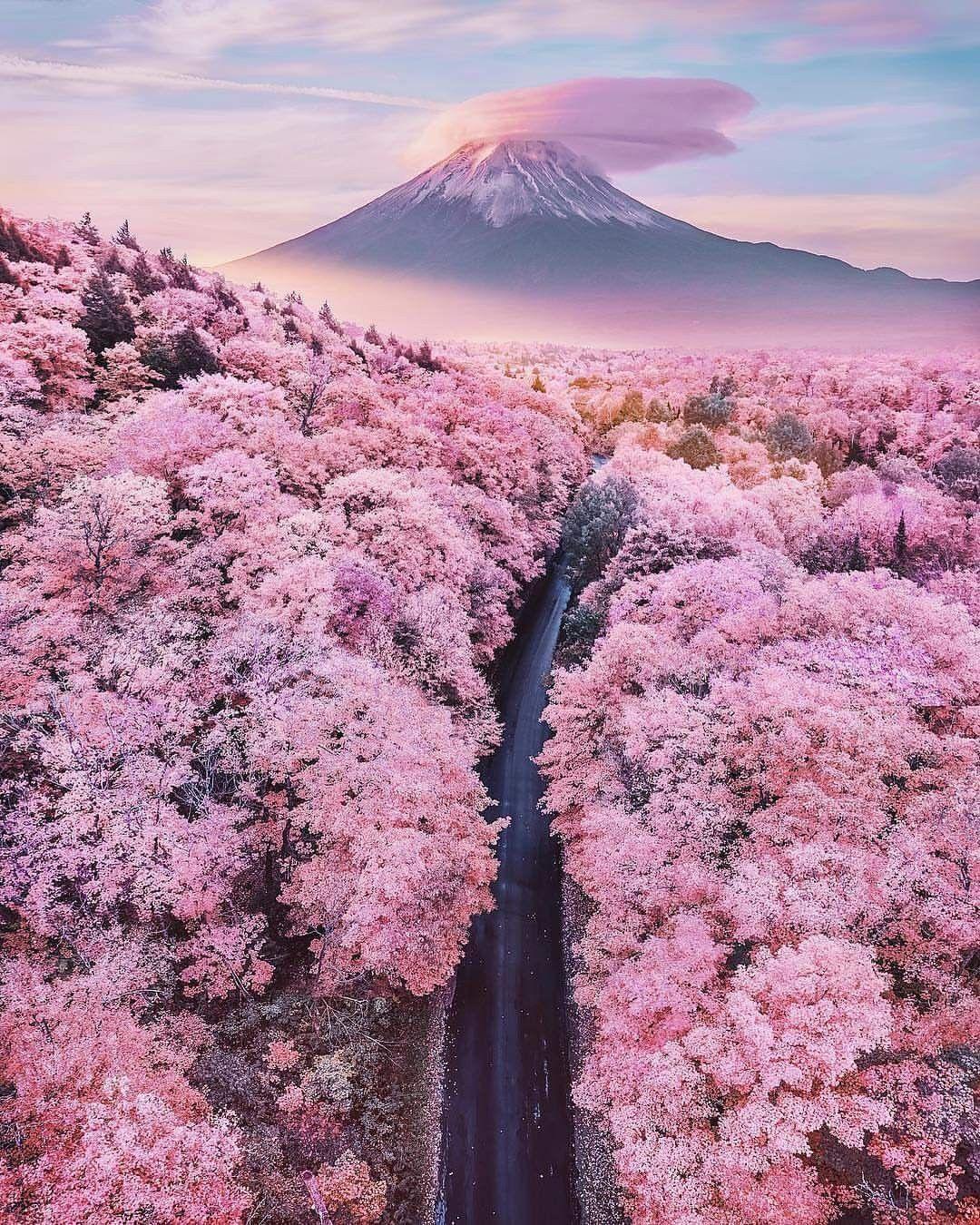 Spring Time In Fuji Shizuoka Japan By Hobopeeba Kristina Makeeva Cherry Blossom Japan Beautiful Nature Beautiful Landscapes