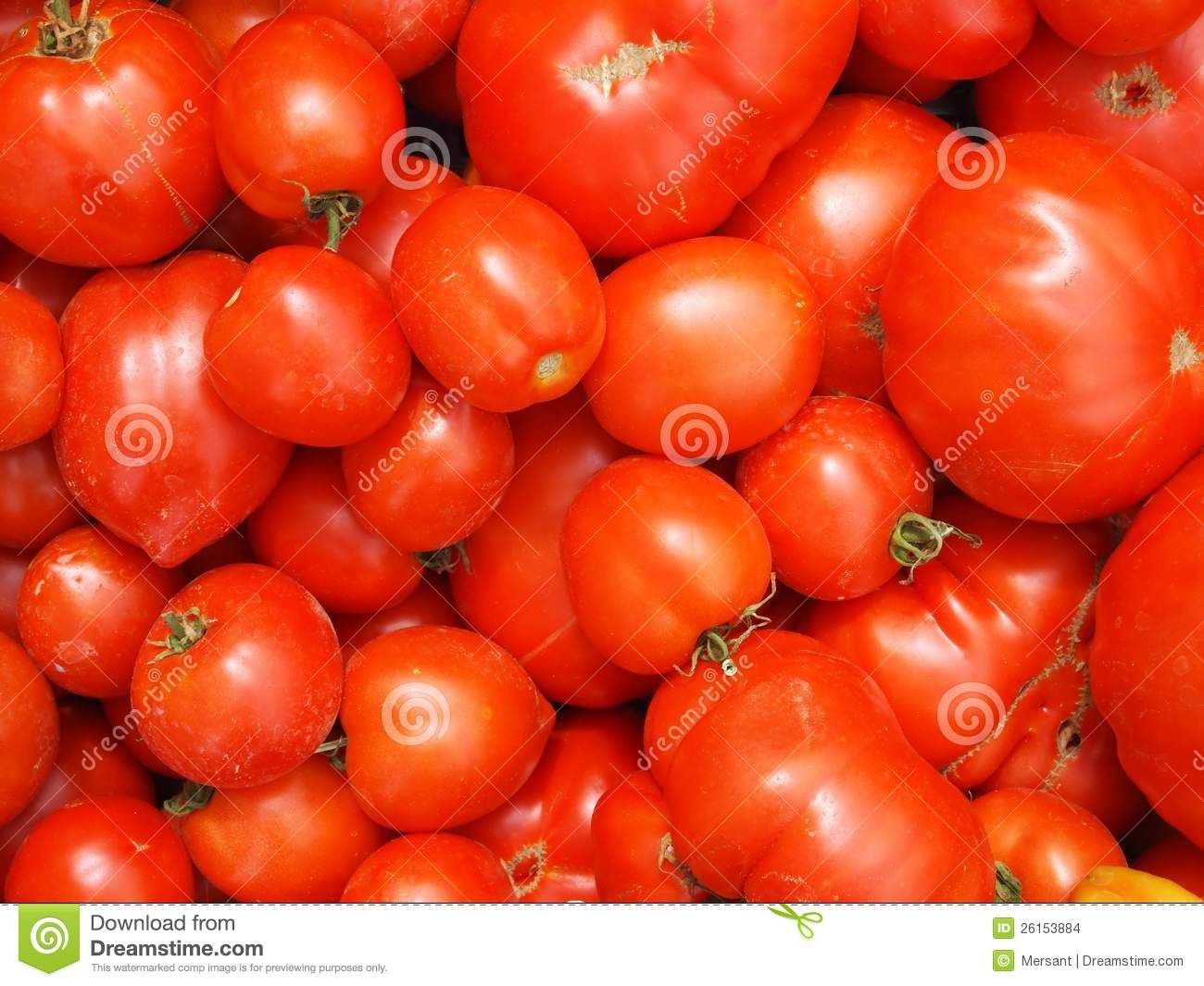 Many fresh tomatoes without background