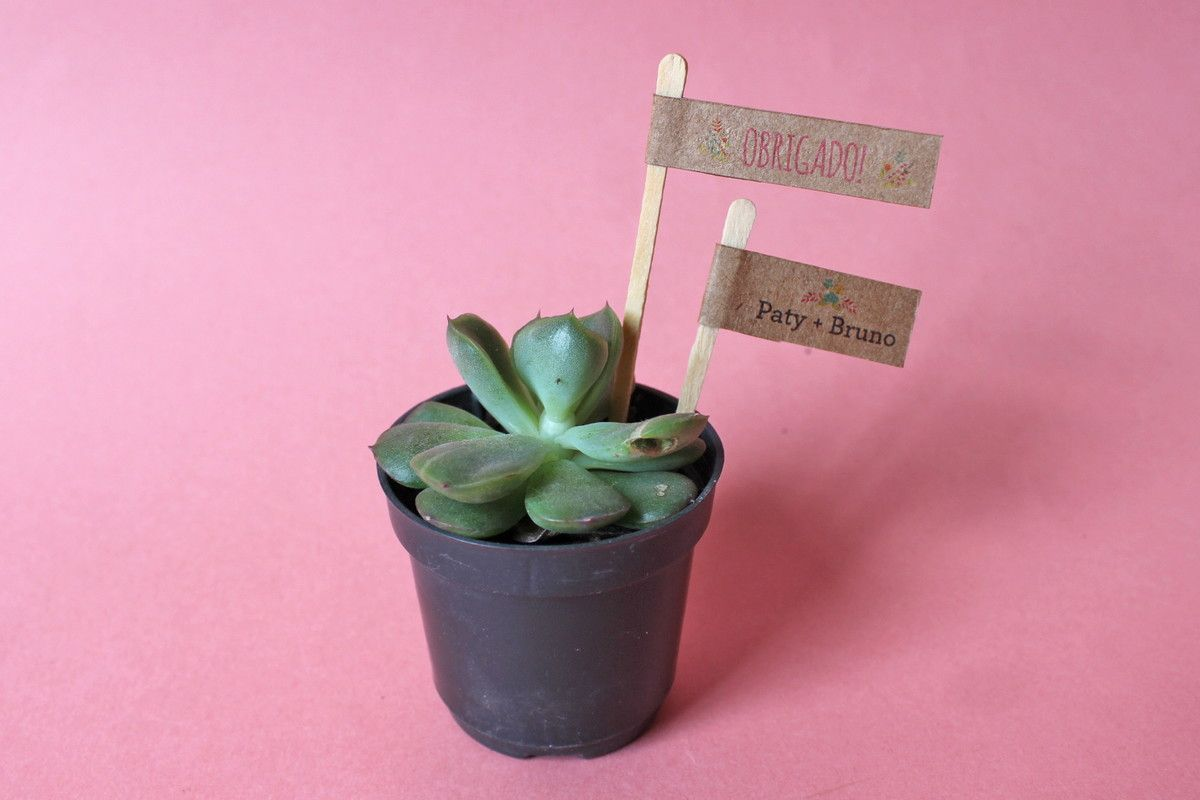 suculenta papel kraft - Pesquisa Google | Lembrancihhas | Pinterest ...