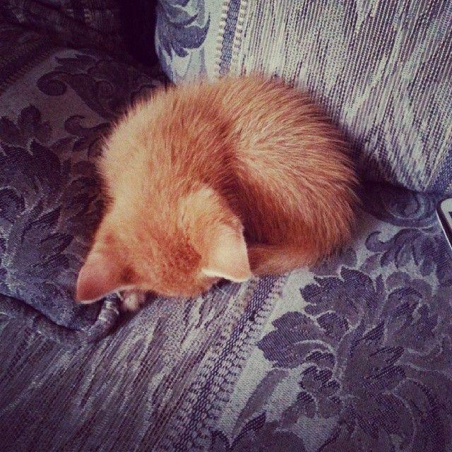 crispy_cat_