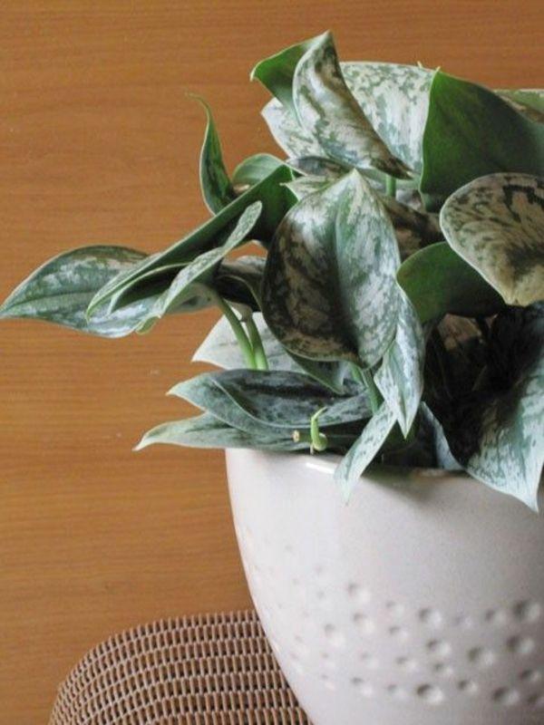 Efeu Zimmerpflanze efeutute efeu zimmerpflanzen wenig licht schlafen