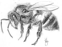 Insect Drawings Google Search Insectos Dibujo De Abeja