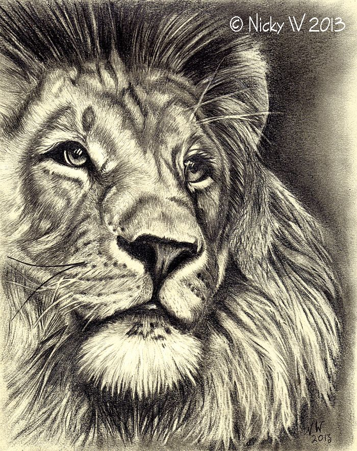 Graphite pencil sketch of a lion