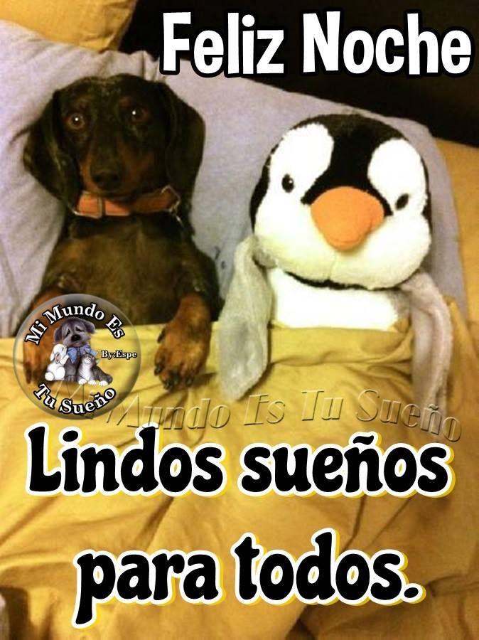 Buenas Noches Perros Lindos Cachorros Adorables Humor De Perros
