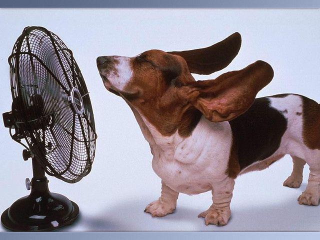 Cooling Off By Sweet Neko Basset Hound Fan Sweet Neko Funny