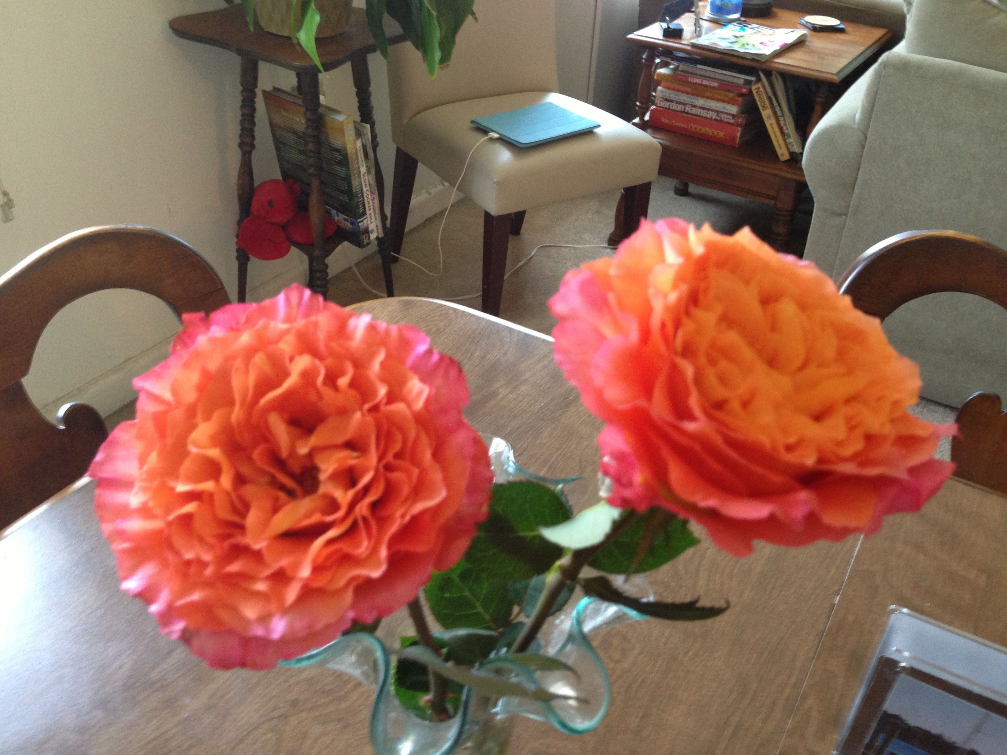 Free Spirit Rose, South America