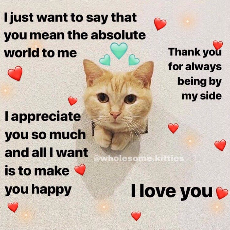 Tag Someone You Are Grateful For Follow Wholesome Kitties For More Wholesomecats Wholesomememes Wholesome Love You Meme Flirty Memes Cute Love Memes