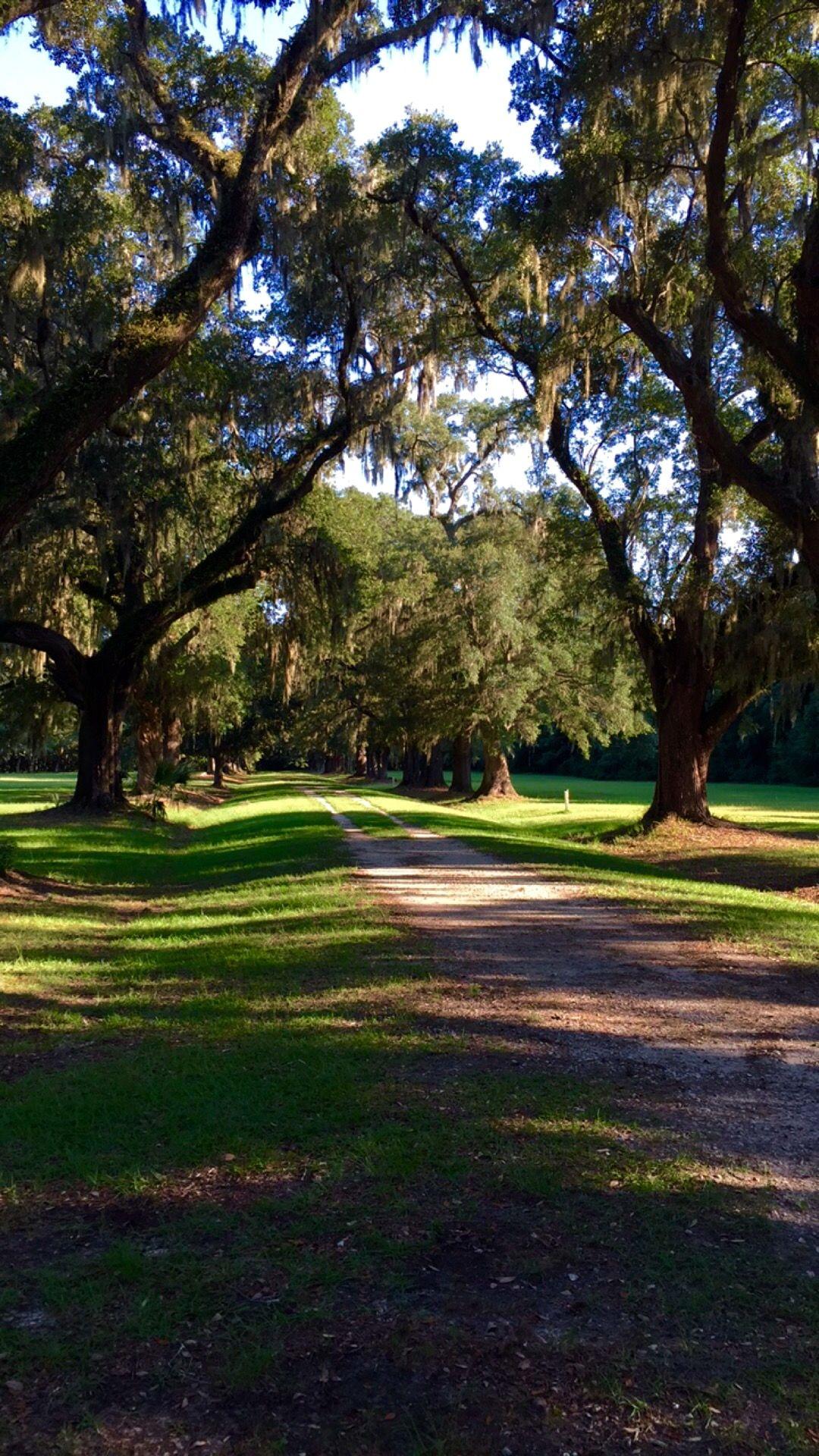 Under the oaks Charleston SC