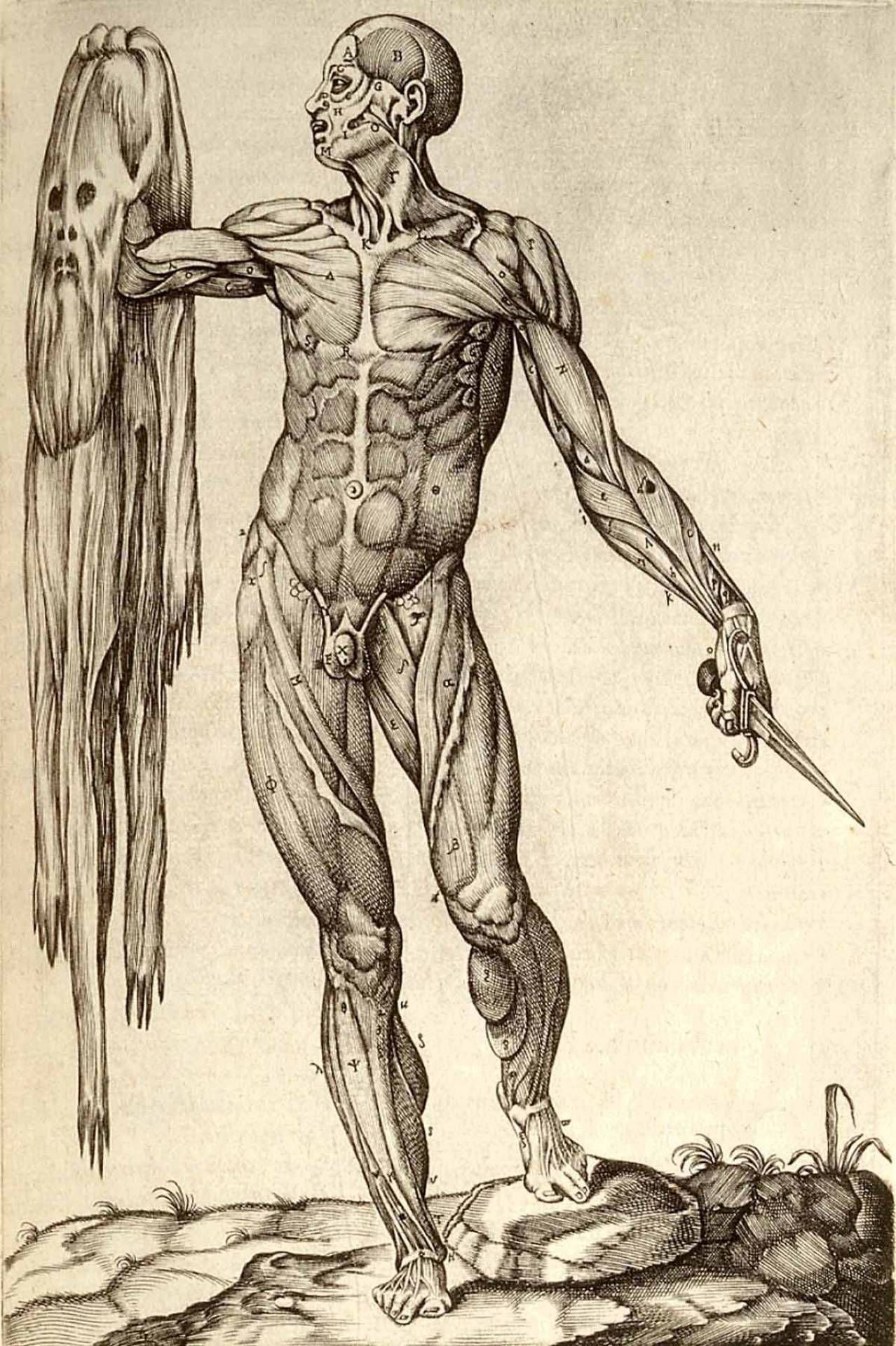 2516892-anatomy-of-human-body-renaissance.jpg 1,278×1,920 pixels ...