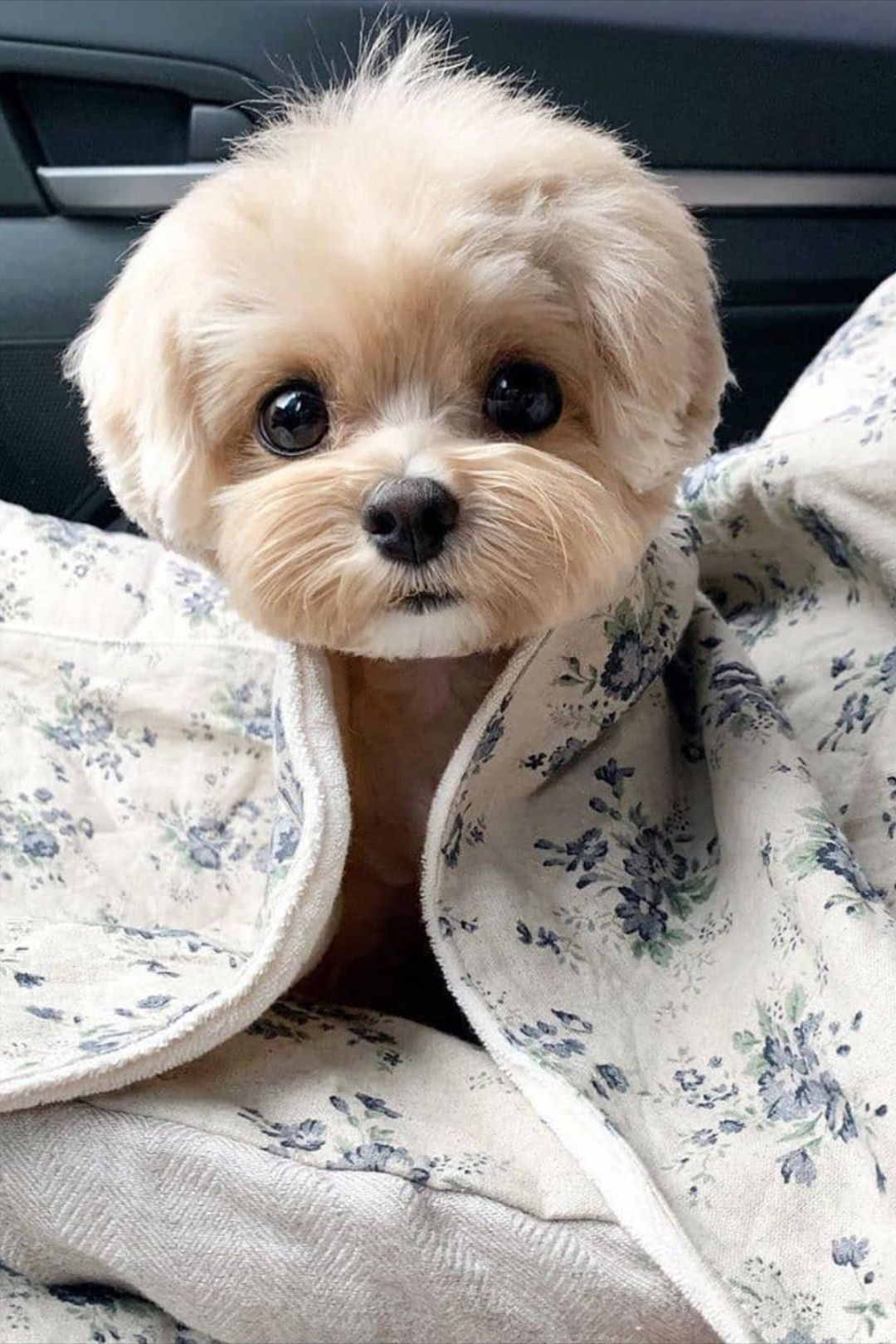 Pin By Kathrine Howard On Awwwww In 2020 Cute Animals Cute Dogs Breeds Cute Dogs And Puppies