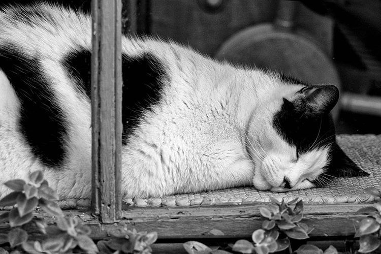 "keithdotson: ""I think his nightlife is getting him down. Sleepy cat in a New Orleans French Quarter shop window #blackandwhite #cat #sleepingcat #neworleans #frenchquarter #nola #travel """