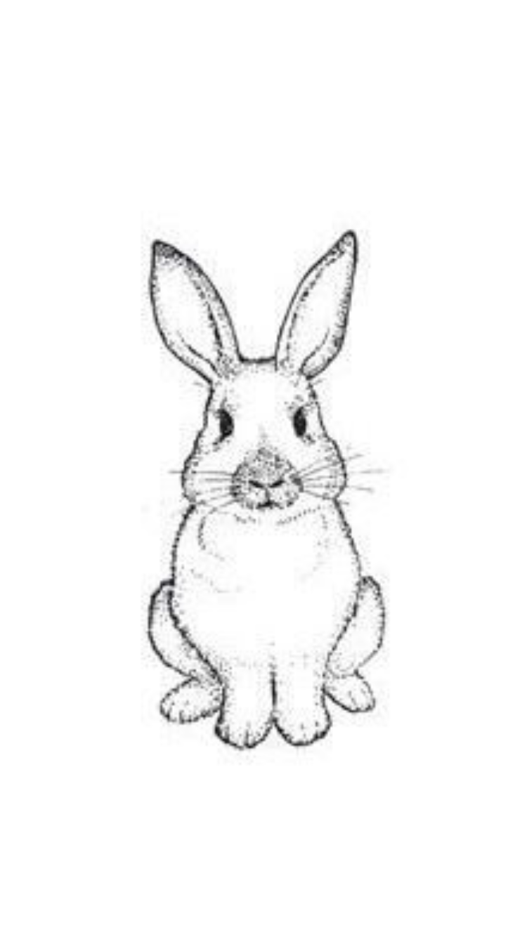 - Pin By Mitzi Cuevas On Pets Bunny Drawing, Bunny Art, Outline