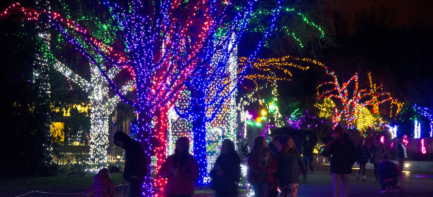 The Best Holiday Traditions In Seattle Lyft Blog Holiday Lights Display Woodland Park Woodland Park Zoo