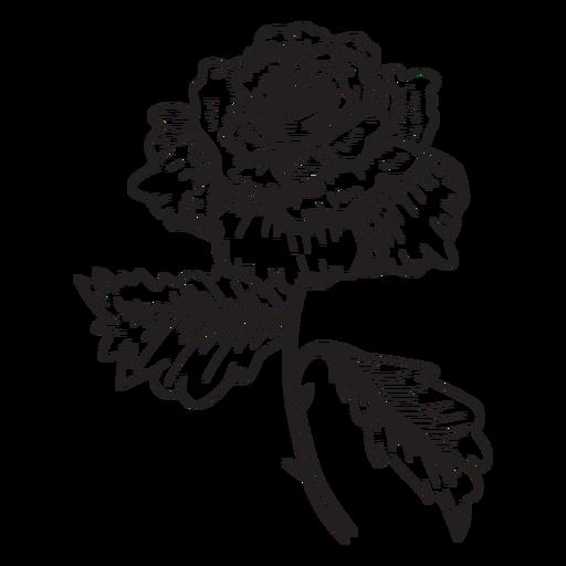 Rose Flower Sketch Icon Rose Flower Sketch Images Flower Sketch Images Rose Flower Sketch Sketch Icon