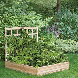 "Raised natural cedar garden bed with trellis. Product: Garden bed and trellis     Construction material: Cedar  Color: Natural    Features: Efficient way to grow a beautiful healthy gardenTrellis allows climbing plants to grow verticallyComes unfinished and ready to stain   Dimensions: 44"" H x 48"" W x 48"" D"