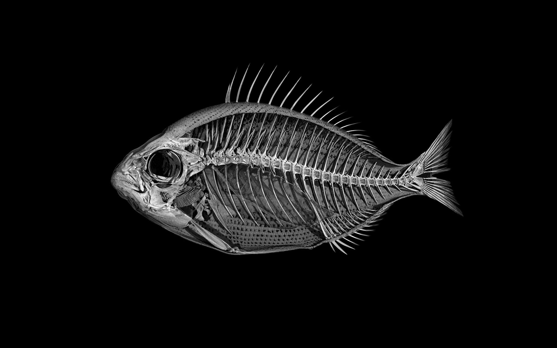 Giles Revell From The Project Fish Deconstruction
