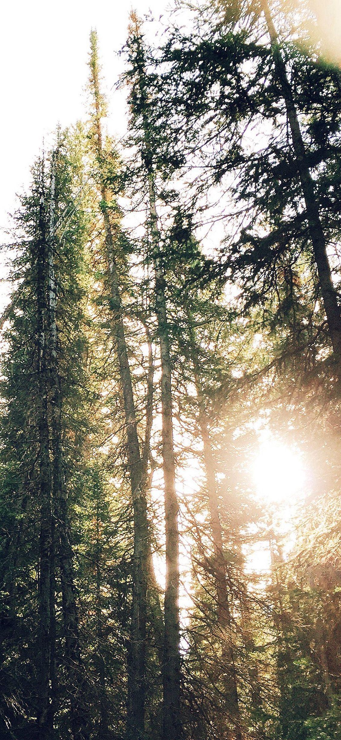Tree Sunshine Nature Iphone X Wallpaper