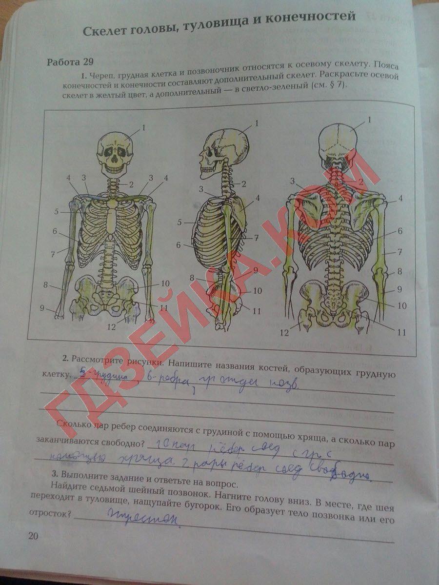 Бесплатные решебники по географии в тетради 7 класс витченко обух станкевич
