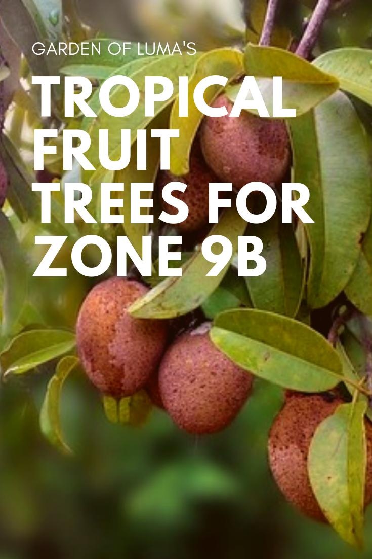Growing Tropical Fruit Trees Zone 9b Fruit Tree Garden Fruit Trees Growing Fruit Trees