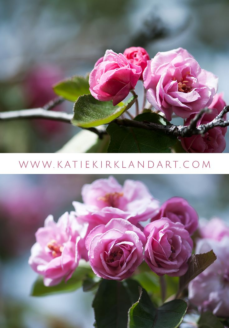 """Springtime Pink"" art prints - sweet pinks"