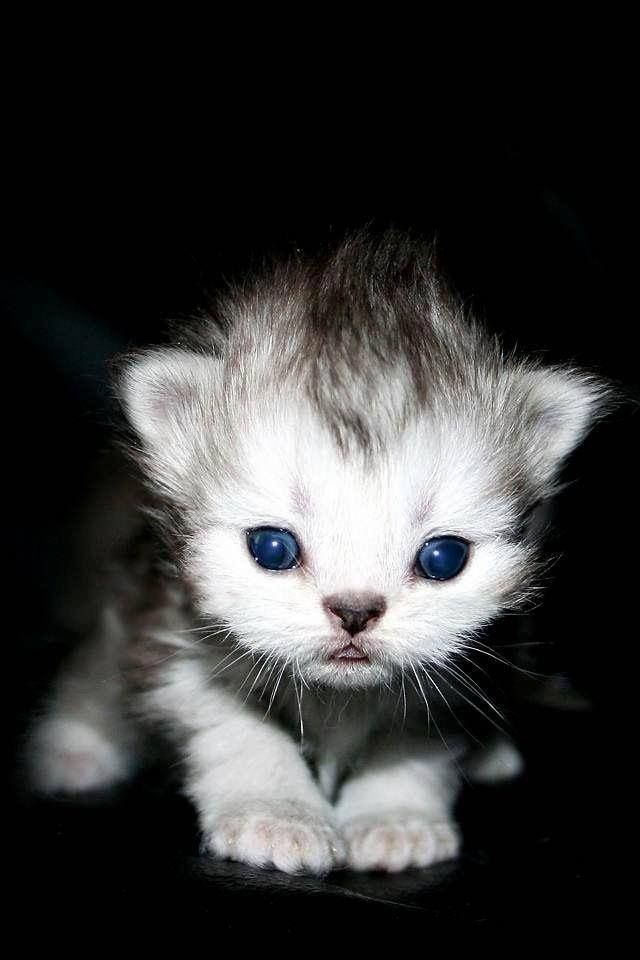 Baby Kitten Warm Fuzzy Baby Cats Kittens Cutest Cute Animal Pictures