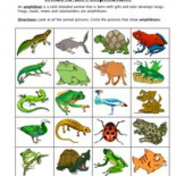 Amphibian Classification Worksheet
