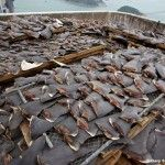 Chinese Government to stop serving shark fin soup