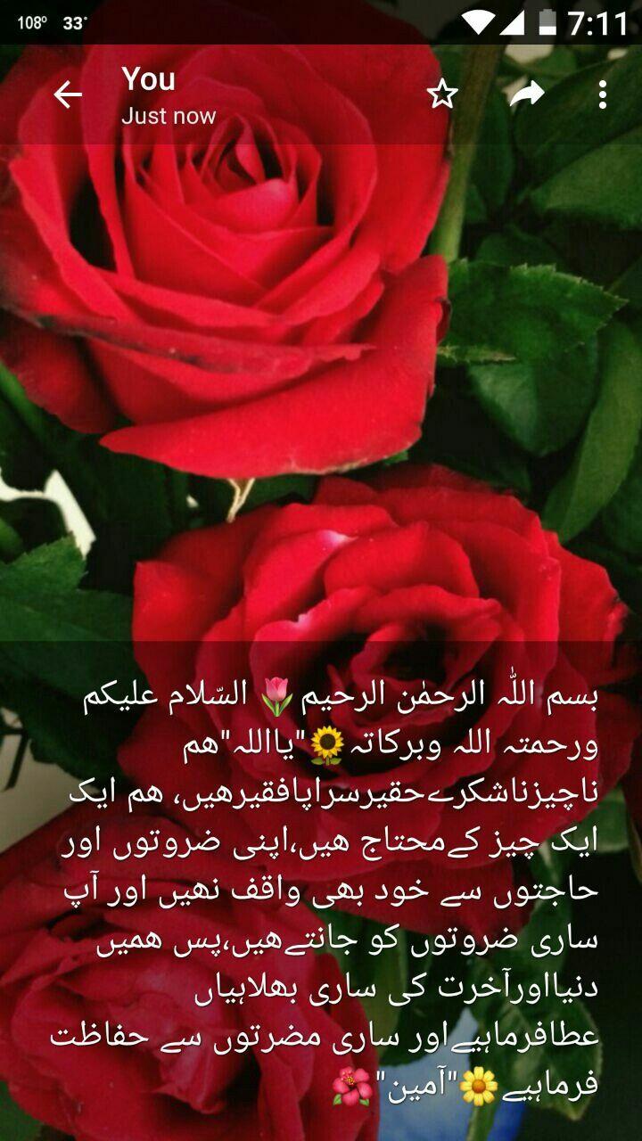 Pin By Mian Zubair Zia On Duain Flowers Plants Rose