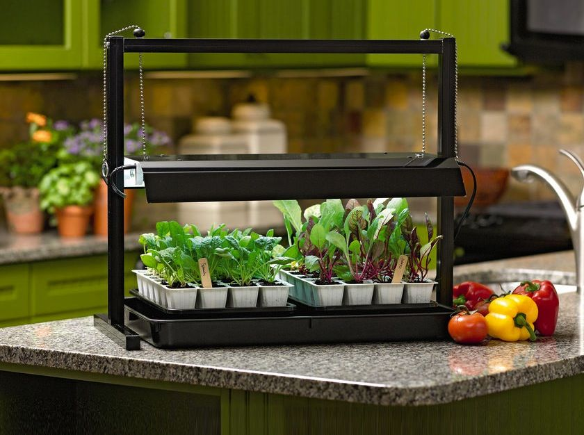 Small Tabletop Grow Light System with Seed Starting Supplies. Grow lights can make you and your plants happier    Gardening