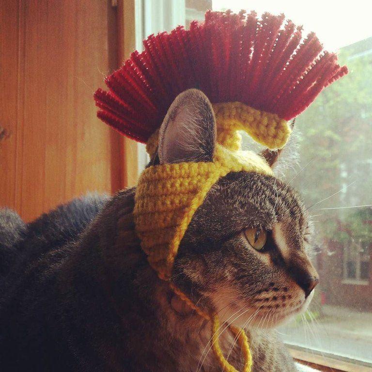 Roman Centurion Cat Hat Crochet Cat Memes Funny Cat Pictures Funny Cat Memes