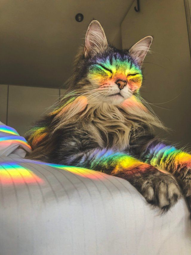 So purr-ty! #rainbow #nyancat #catlover #colorful   Cute ...