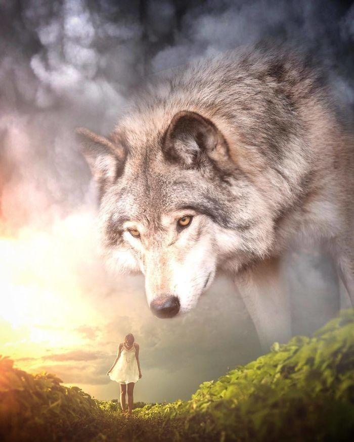 дизайн волк одиночка картинки портфолио сайте