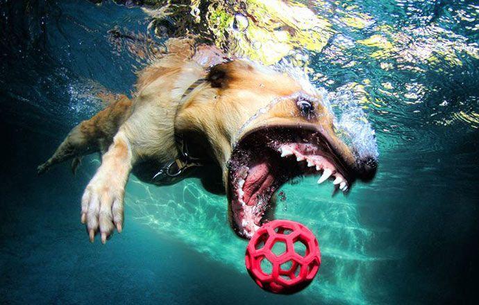 Amazing underwater dogs