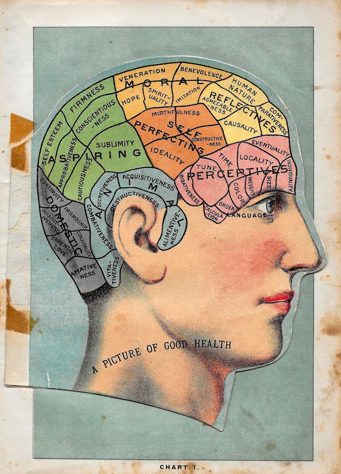 Medical Illustration Human Head Clip Art Phrenology Head Phrenology Vintage Art