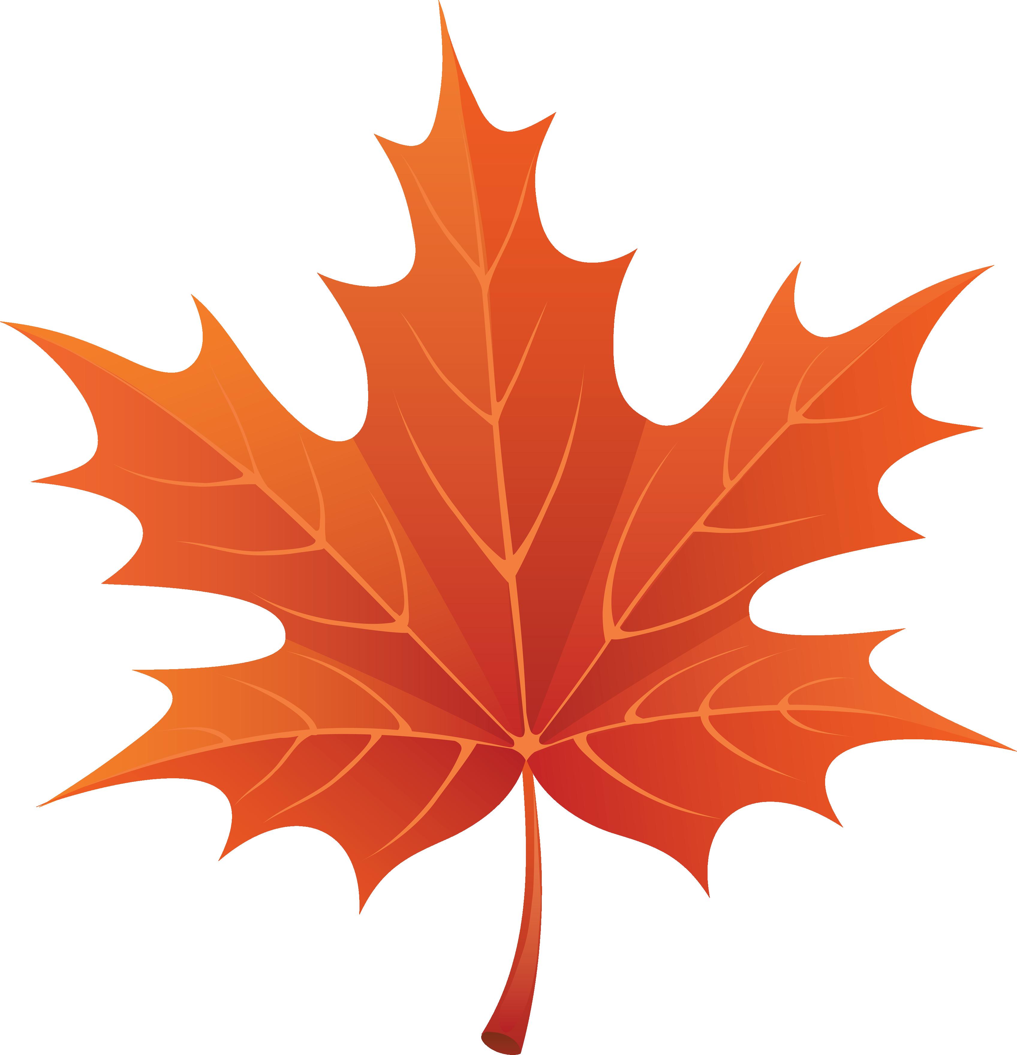 fall leaf clipart google search [ 3392 x 3519 Pixel ]